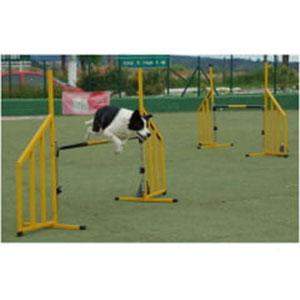 Equipamentos para Treinamento de Cães